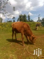 6 Acre Land | Land & Plots For Sale for sale in Kakamega, Isukha East