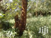 6.5 Acres At Tungutu..Kitui | Land & Plots For Sale for sale in Kitui, Kyangwithya East