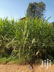 100 By 50 Plot | Land & Plots For Sale for sale in Nyandarua, Leshau Pondo