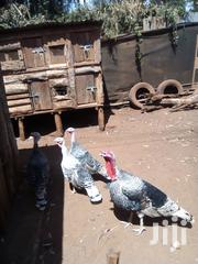 Very Good Breeding Turkey For Sale | Livestock & Poultry for sale in Kiambu, Kikuyu
