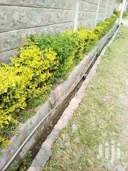 Beautiful Flowers For Your Fence | Garden for sale in Kiambu, Uthiru