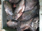 Fresh Tilapia Fish. | Fish for sale in Nakuru, Nakuru East