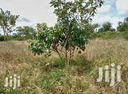 Commercial Land on Sale   Land & Plots For Sale for sale in Embu, Mbeti North