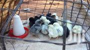 Kienyeji Chicks. | Livestock & Poultry for sale in Nairobi, Embakasi