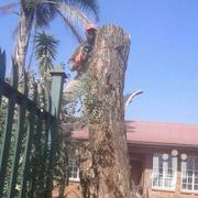 Dangerous Tree Cutting And Big Tree Felling Service | Landscaping & Gardening Services for sale in Nairobi, Westlands