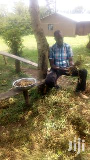 Supervisor, Support Staff, Assistant Farm Manager | Farming & Veterinary CVs for sale in Busia, Malaba North