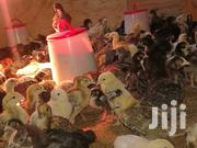 Improved Kienyeji Chicks | Livestock & Poultry for sale in Nairobi, Nairobi Central