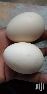 Duck Eggs For Sale | Livestock & Poultry for sale in Nakuru, Lanet/Umoja
