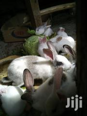 Bunny's For Sale | Other Animals for sale in Nairobi, Ruai