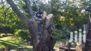 Tree Experts /Tree Removal, Tree Trimming | Landscaping & Gardening Services for sale in Nairobi, Westlands