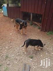 Gsd Mongrel Cross. Puppies | Dogs & Puppies for sale in Nairobi, Ruai