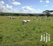 100 By 100 Plot For Sale At Migori Town   Land & Plots For Sale for sale in Migori, Ragana-Oruba