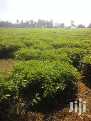 Plot For Sale | Commercial Property For Sale for sale in Nyamira, Nyansiongo