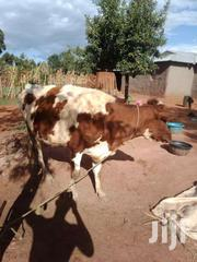 Dairy Cow On Sell   Livestock & Poultry for sale in Trans-Nzoia, Kiminini
