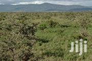 Prime, Virgin Agricultural Land, 7acres At Pesi Farm On Sale | Land & Plots For Sale for sale in Nakuru, Biashara (Naivasha)