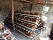 Cages For Chicken | Farm Machinery & Equipment for sale in Kiambu, Thika
