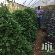 Multi Leveled/ Tier Gardens. | Landscaping & Gardening Services for sale in Kiambu, Mang'U