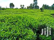 Gatura 2acres With Tea Bushes | Land & Plots For Sale for sale in Murang'a, Kariara