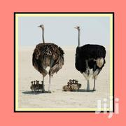 Wall Art Ostrich Frame | Home Accessories for sale in Mombasa, Ziwa La Ng'Ombe