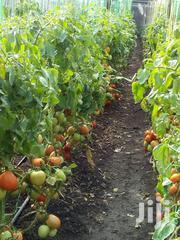 Fresh Tomatoes For Sale | Meals & Drinks for sale in Nairobi, Karen