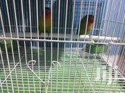 Love Birds | Birds for sale in Nairobi, California
