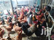 Best Chicken Breed In Kenya We Sell Chicks From.1day To 1month | Livestock & Poultry for sale in Kiambu, Kabete