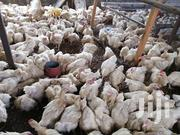 Broilers For Sale | Livestock & Poultry for sale in Nairobi, Ruai