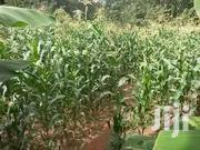 Green Silage | Meals & Drinks for sale in Murang'a, Kambiti