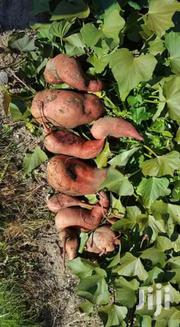 Sweet Potato Runners For Sale | Feeds, Supplements & Seeds for sale in Laikipia, Rumuruti Township