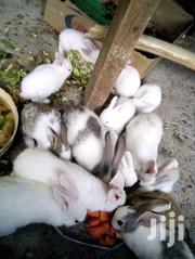 Rabbits On Sale   Livestock & Poultry for sale in Machakos, Masii