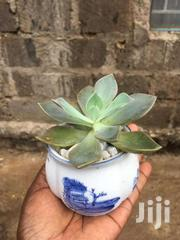 Indoor Plants And Indoor Flowers | Garden for sale in Nairobi, Njiru
