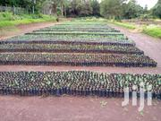 Trees For Sale | Feeds, Supplements & Seeds for sale in Kiambu, Kinale