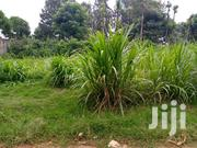 Prime Plot | Land & Plots For Sale for sale in Kiambu, Githunguri