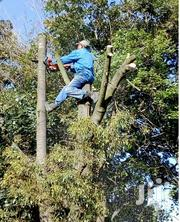 24 HR Expert Tree Cutting/Tree Removal/Tree Pruning/ Fast & Affordable | Landscaping & Gardening Services for sale in Nairobi, Westlands