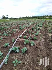 Cabbages For Sale | Meals & Drinks for sale in Laikipia, Salama