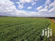 850 ACRES AGRICULTURAL LAND FOR SALE IN TIMAU MERU. | Land & Plots For Sale for sale in Meru, Timau