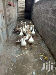 Geese | Livestock & Poultry for sale in Nairobi, Nairobi Central