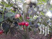 Ripe Tree Tomato Fruits | Meals & Drinks for sale in Nairobi, Kahawa