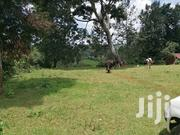 4 Acres for Sale Nyeri Town | Land & Plots For Sale for sale in Nyeri, Rware
