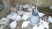 Broilers | Livestock & Poultry for sale in Nairobi, Mountain View