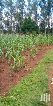 Prime Land For Sale   Land & Plots For Sale for sale in Migori, East Kamagambo