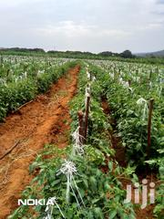 Selling 2 Acre Parcel Of Agricultural Land At Kithimani Yatta Canal | Land & Plots for Rent for sale in Machakos, Kithimani