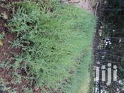Certified Trees And Fruits Seedlings For Sale (Potted) | Other Services for sale in Nyandarua, Githioro