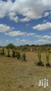 100 Acres For Sale In Juja Farm Mastores 6km From Tarmac. | Land & Plots For Sale for sale in Busia, Bunyala West (Budalangi)