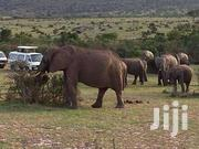 3 Days Masai Mara Daily Departure Camping  Adventure Tour | Travel Agents & Tours for sale in Nairobi, Nairobi Central