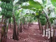 ¼ Acres Of Land-4 Parcels Remaining | Land & Plots For Sale for sale in Meru, Mitunguu