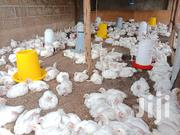 BROILER CHICKEN (370) - Quick Sale | Livestock & Poultry for sale in Nairobi, Kahawa