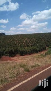 302 Acres For Sale In Kiganjo Rd Off Thika Rd | Land & Plots For Sale for sale in Busia, Bunyala West (Budalangi)