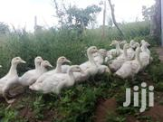 Pekin Ducklings | Livestock & Poultry for sale in Machakos, Masinga Central