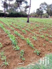 Land 1/4 Elgonview Upper Several Qu | Land & Plots For Sale for sale in Uasin Gishu, Racecourse